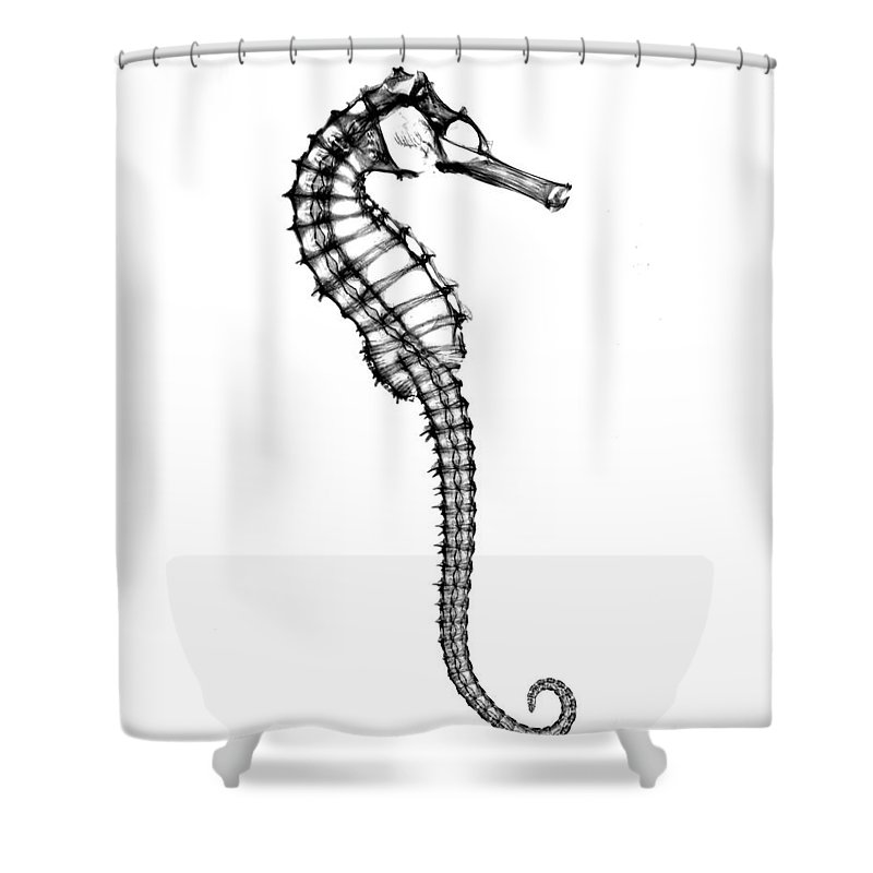 Radiograph Shower Curtain Featuring The Photograph X Ray Of Seahorse By Bert Myers
