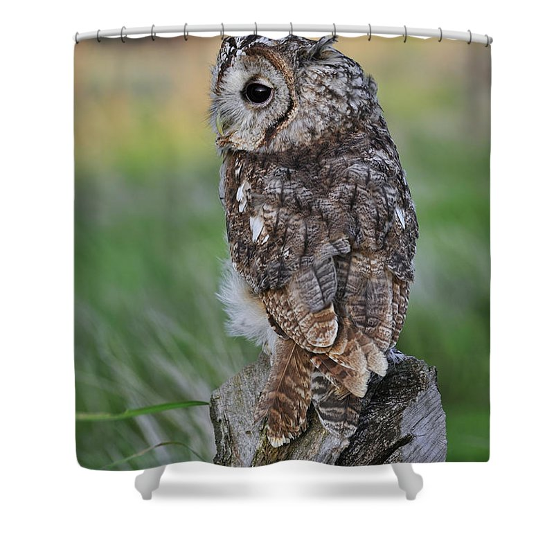 Tawny Owl Shower Curtain featuring the photograph 100205p299 by Arterra Picture Library