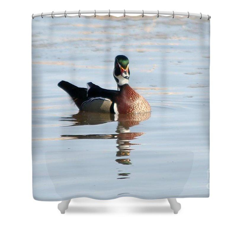 Wood Duck Shower Curtain featuring the photograph Wood Duck by Lori Tordsen