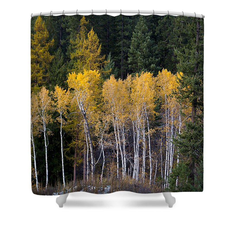 Aspen Shower Curtain featuring the photograph Guardians Of Trestle Creek - 141102a-138 by Albert Seger