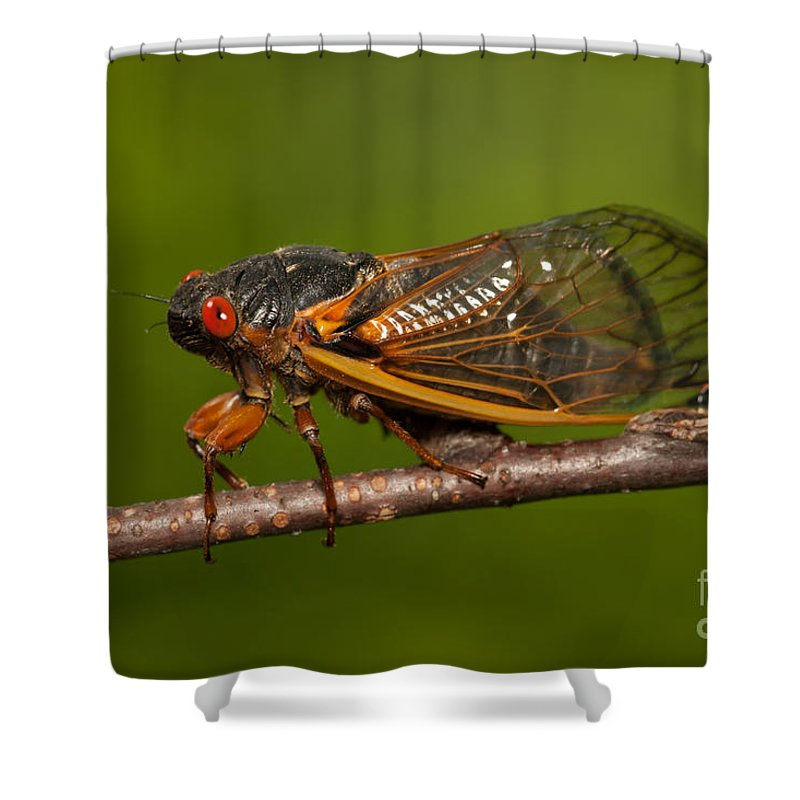 Clarence Holmes Shower Curtain featuring the photograph 17-year Periodical Cicada I by Clarence Holmes
