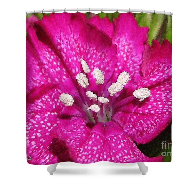 Mccombie Shower Curtain featuring the painting Sweet William From The Super Duplex Bluepoint Mix by J McCombie