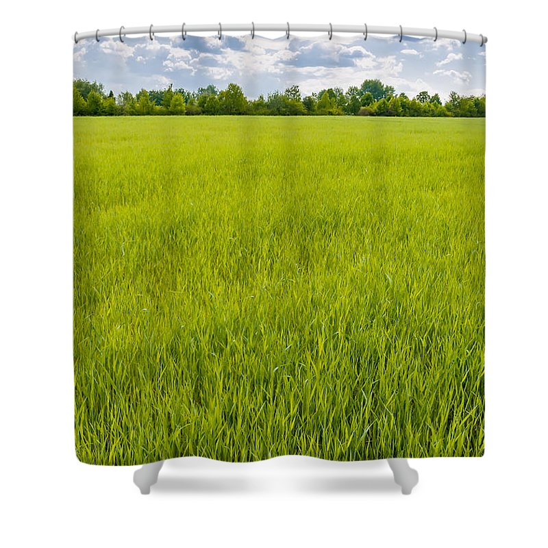 Kiev Shower Curtain featuring the photograph A Field Of Green Wheat Under A Cloudy Sky by Alain De Maximy