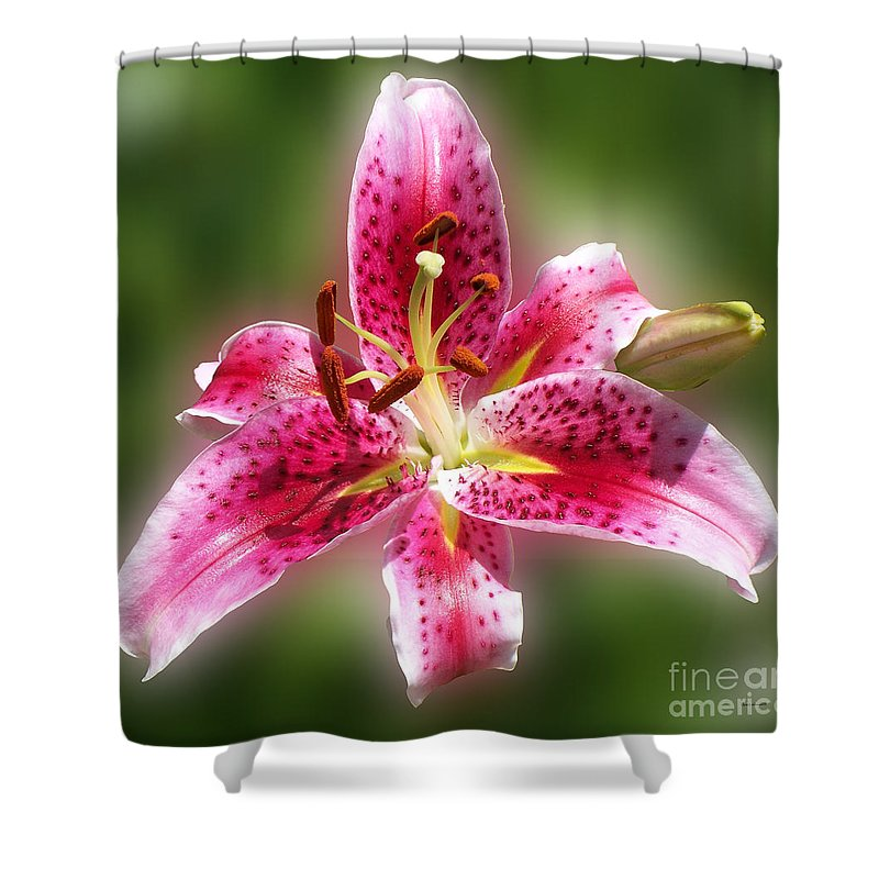 Lilly Shower Curtain featuring the photograph A Lilly For You by Thomas Woolworth
