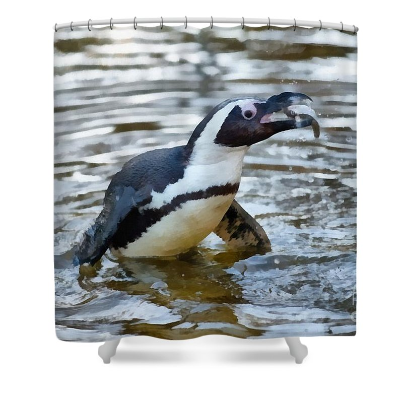 African Penguin Paintings Shower Curtains