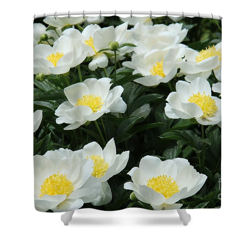 Peonies Shower Curtain featuring the photograph All Together by Christiane Schulze Art And Photography