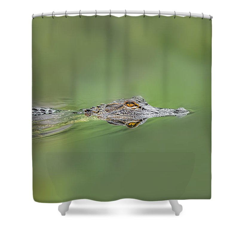 Aggression Shower Curtain featuring the photograph Alligator by Peter Lakomy