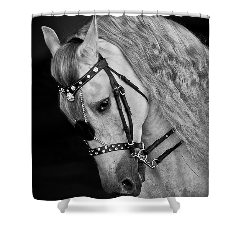Andalusian Shower Curtain featuring the photograph Andalusian by Wes and Dotty Weber