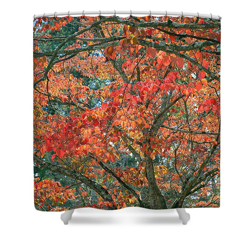 Autumn Shower Curtain Featuring The Photograph Leaves By Rafael Salazar