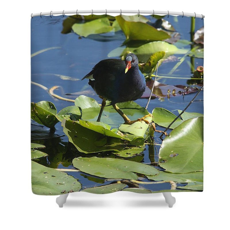 Bird Shower Curtain featuring the photograph Balancing Act by Christiane Schulze Art And Photography