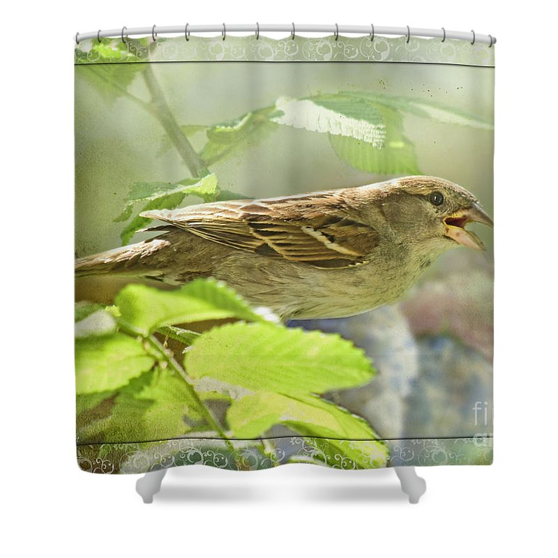 Nature Shower Curtain featuring the photograph Beautiful Singer by Debbie Portwood