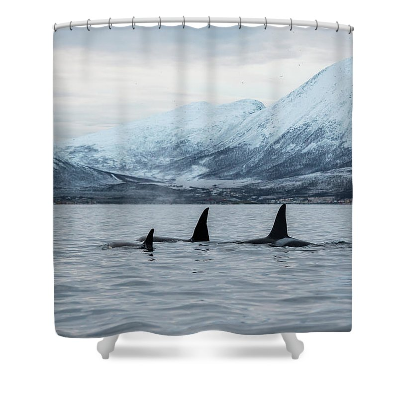 Snow Shower Curtain featuring the photograph 2 Big 2 Small by By Wildestanimal