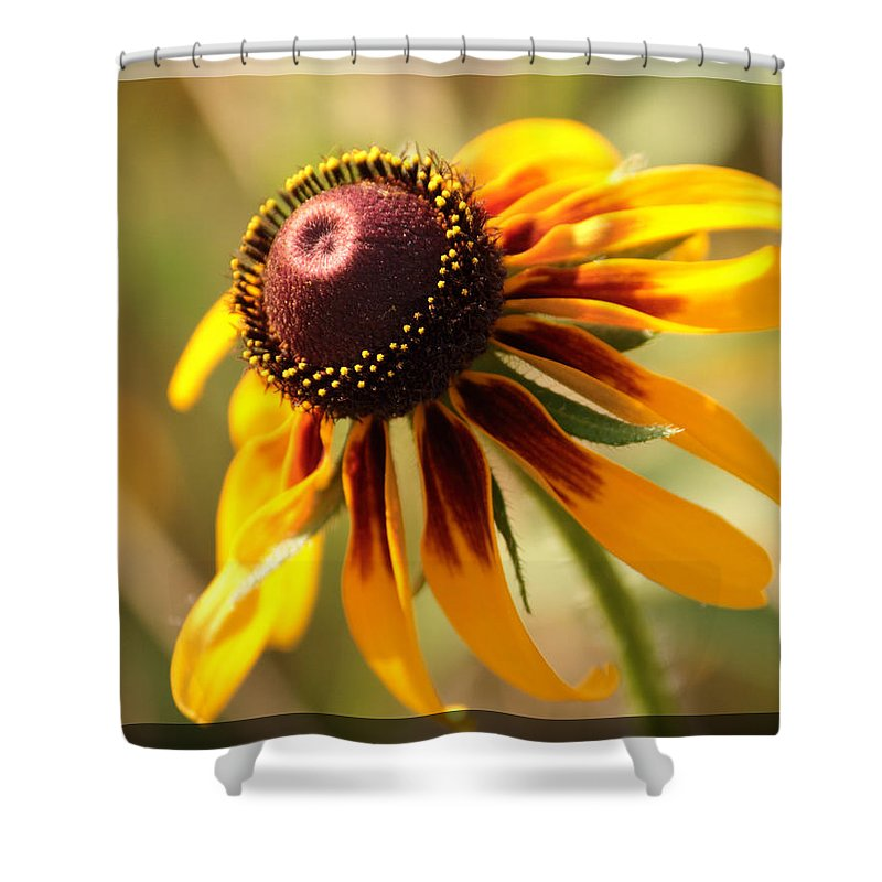Black-eyed Susan Shower Curtain featuring the photograph Black Eyed Susan by Karen Beasley