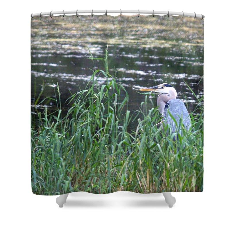 Michigan Shower Curtain featuring the photograph Blue Heron by Linda Kerkau