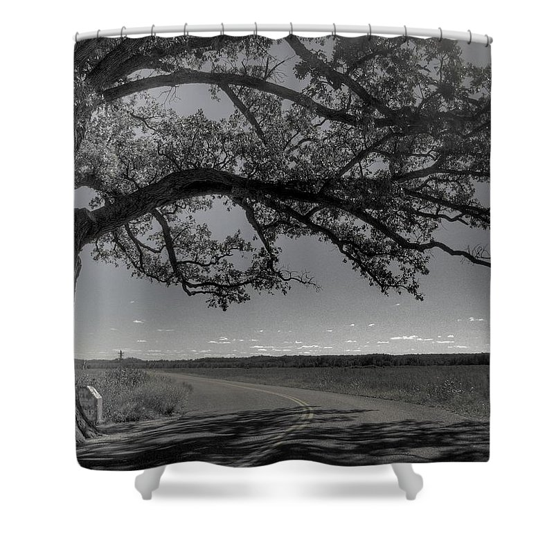 Bur Oak Tree Shower Curtain featuring the photograph Burr Oak Tree by Jane Linders
