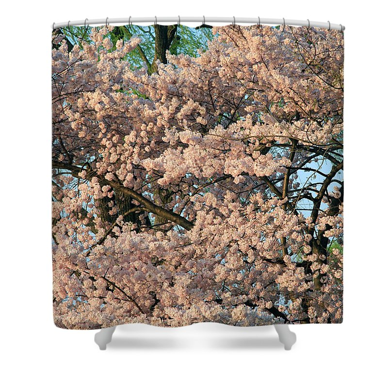 Cherry Blossom Shower Curtain featuring the photograph Cherry Blossoms In Pink And Brown by Cora Wandel