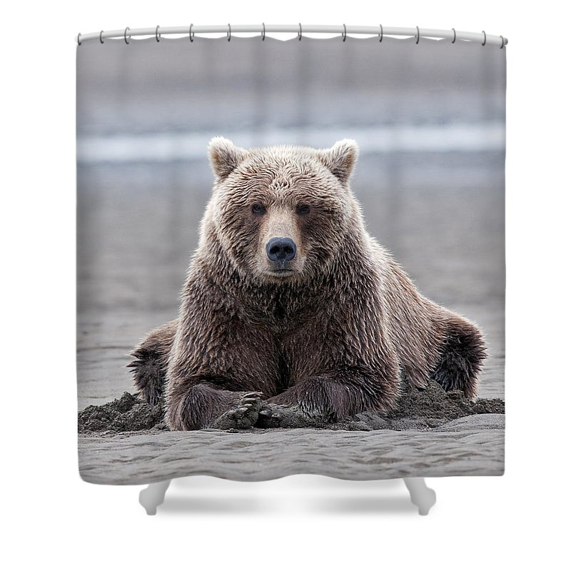 Wild Shower Curtain featuring the photograph Coastal Brown Bears On Salmon Watch by Gary Langley