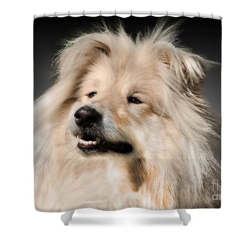 Black Background Shower Curtain featuring the photograph Collie Dog by Linsey Williams
