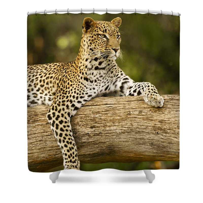 Africa Shower Curtain featuring the photograph Dignity by Michele Burgess