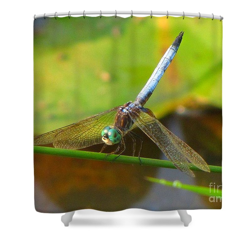 Dragonfly Shower Curtain featuring the photograph Dragonfly by Rrrose Pix