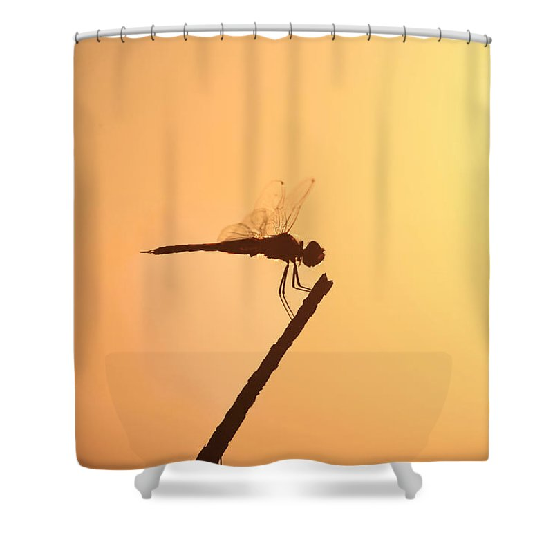 Silhouette Shower Curtain featuring the photograph Dragonfly Silhouette by Douglas Barnard