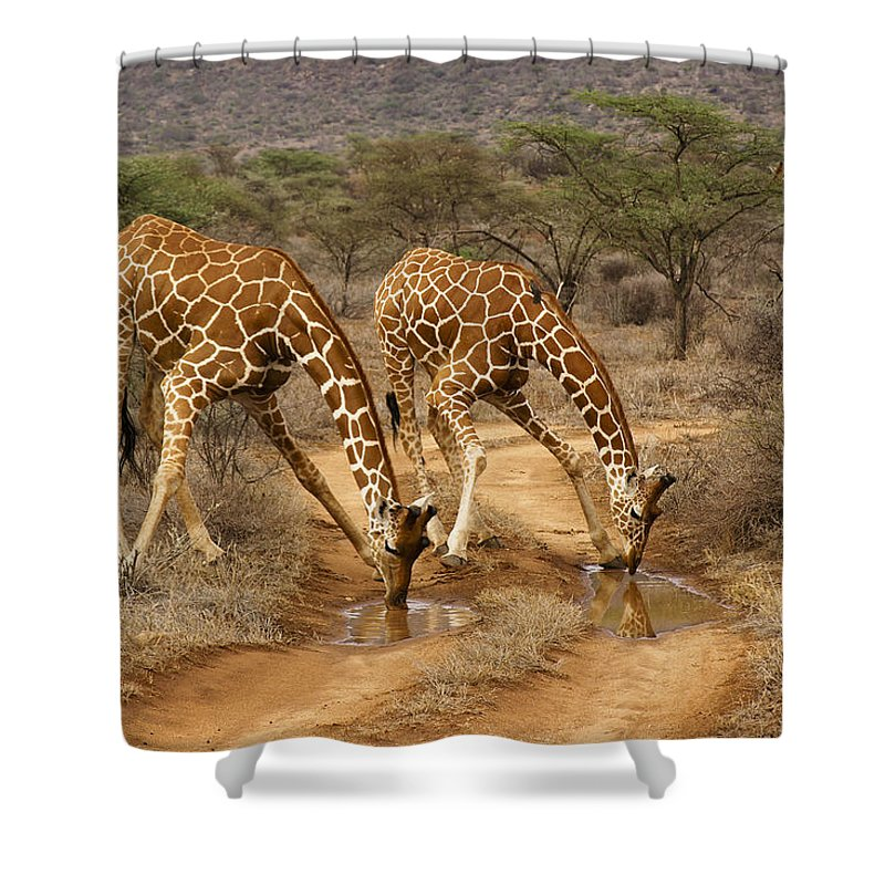 Africa Shower Curtain featuring the photograph Drinking in Tandem by Michele Burgess