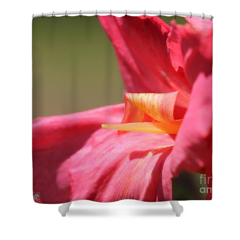 Canna Shower Curtain featuring the photograph Dwarf Canna Lily Named Shining Pink by J McCombie