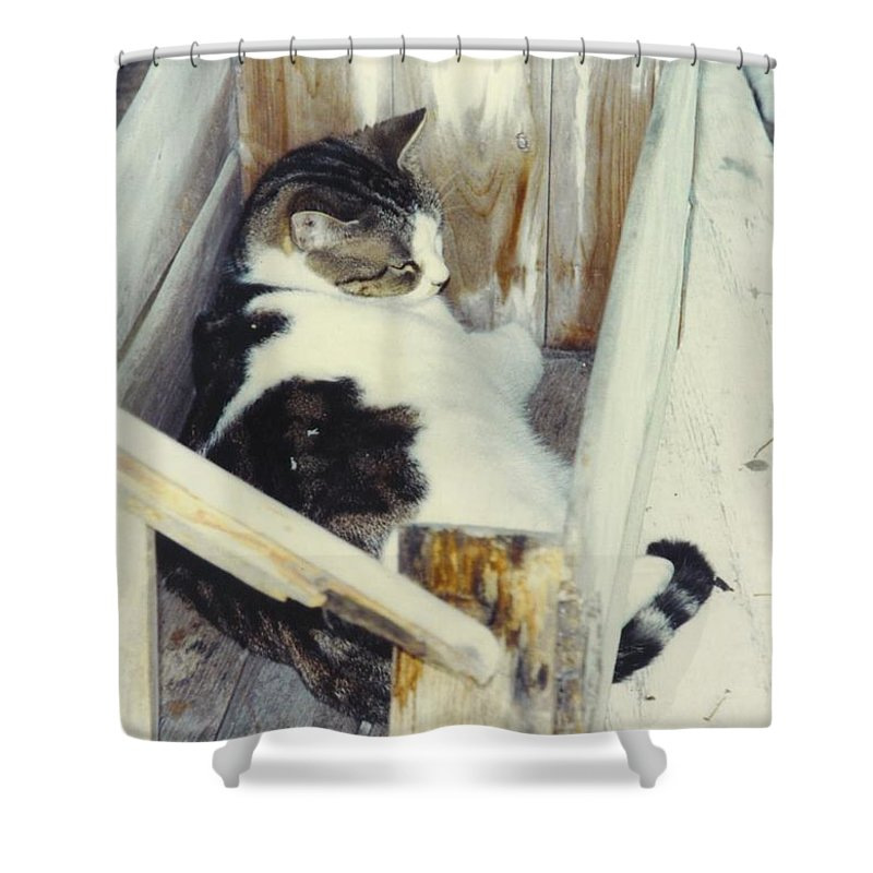 A Bed In The Box Shower Curtain featuring the photograph Emmie by Robert Floyd