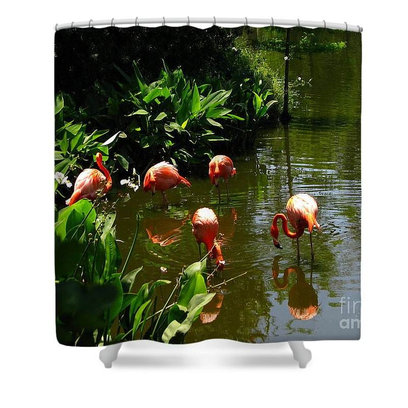 Flamingos Shower Curtain featuring the photograph Flamingos by Greg Patzer