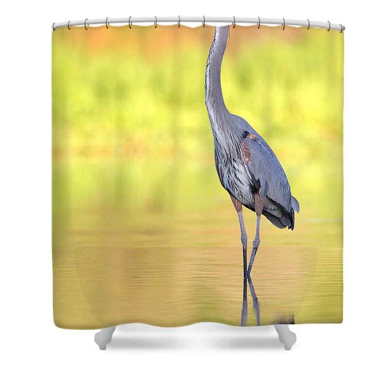 Gbh Shower Curtain featuring the photograph Gbh At First Light by Bryan Keil
