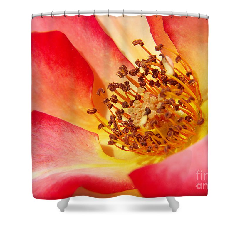 Photography Shower Curtain featuring the photograph Gentle Breeze by Jackie Farnsworth