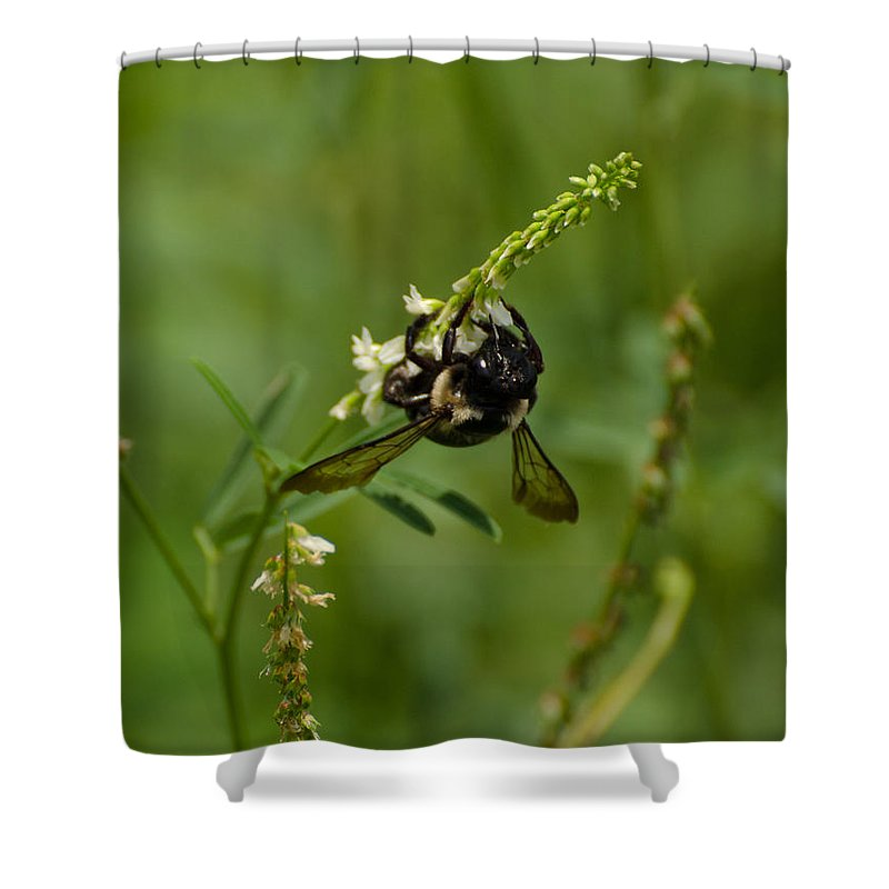 Insect Shower Curtain featuring the photograph Hang On by Donna Brown