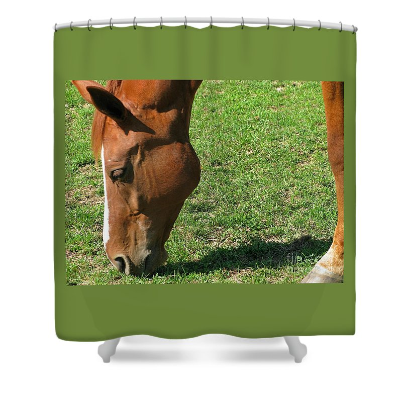 Horse Shower Curtain featuring the photograph In Green Pasture by Ann Horn
