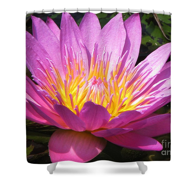 Lilly Shower Curtain featuring the photograph It by Amanda Barcon