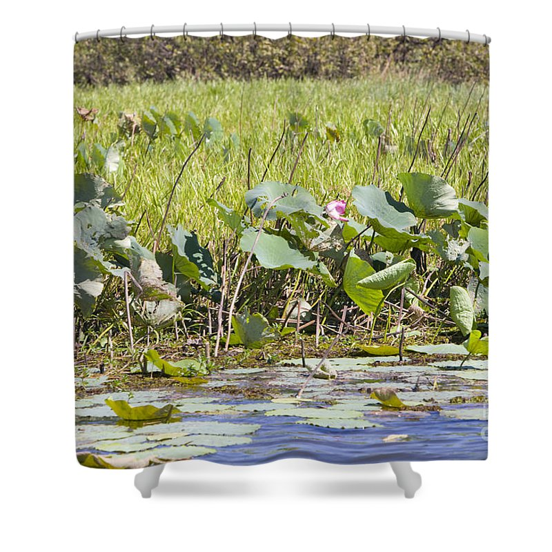 Northern Territory Shower Curtain featuring the photograph Kakadu Life by Martin Berry