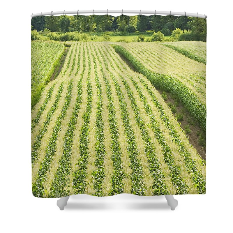 Corn Shower Curtain featuring the photograph Late Summer Corn Field In Maine by Keith Webber Jr