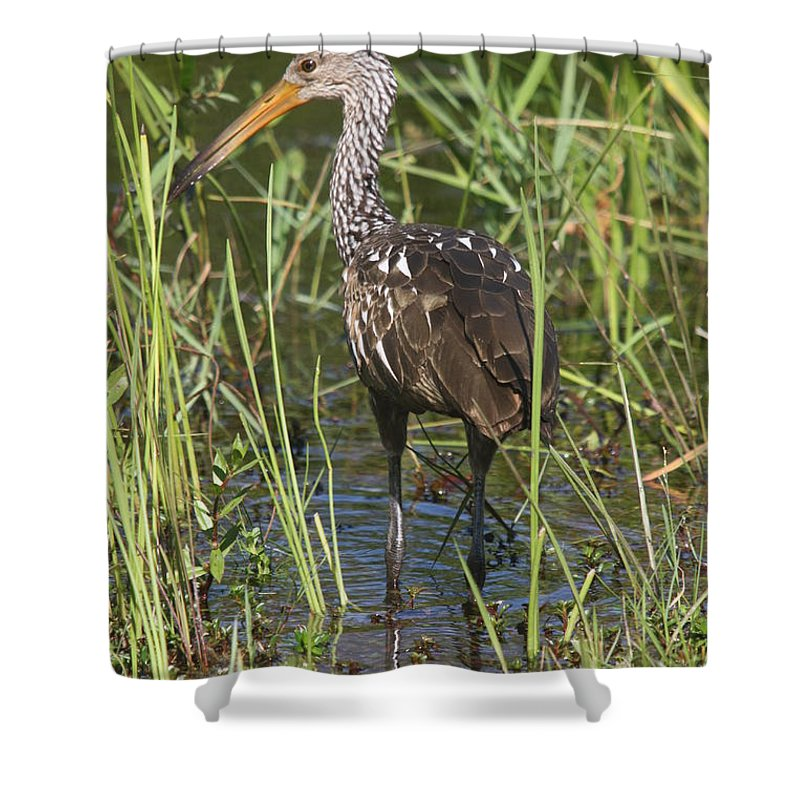 Limpkin Shower Curtain featuring the photograph Limpkin by Christiane Schulze Art And Photography