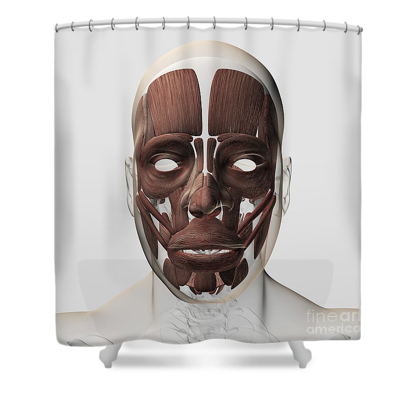 Square Image Shower Curtain featuring the digital art Medical Illustration Of Male Facial by Stocktrek Images