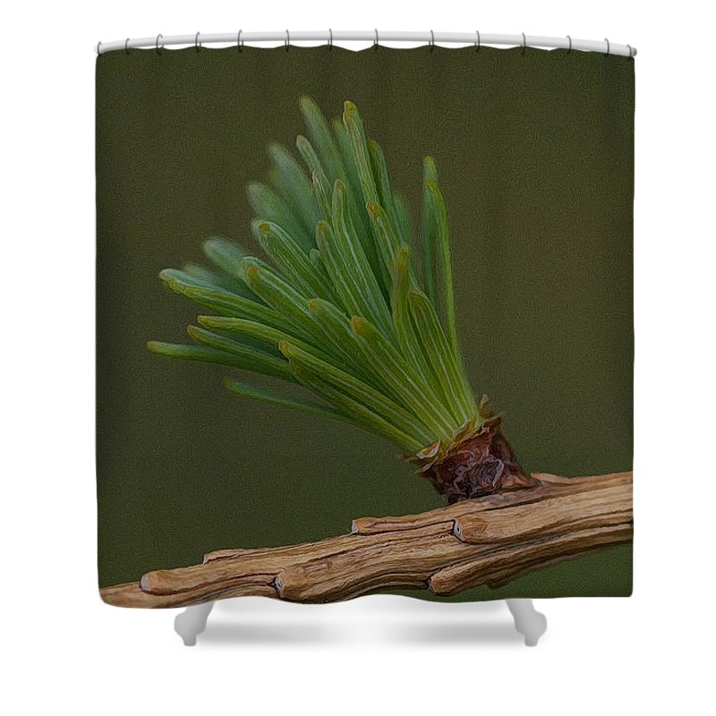 Pine Shower Curtain featuring the photograph New Growth by WB Johnston