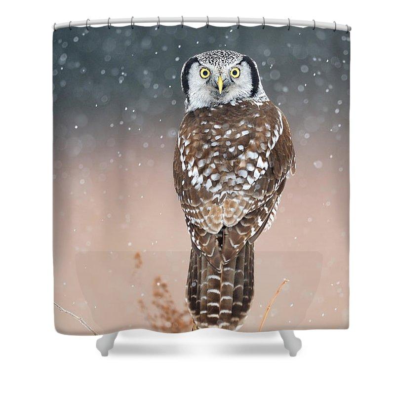 Bird Shower Curtain featuring the photograph Northern Hawk Owl by Scott Linstead