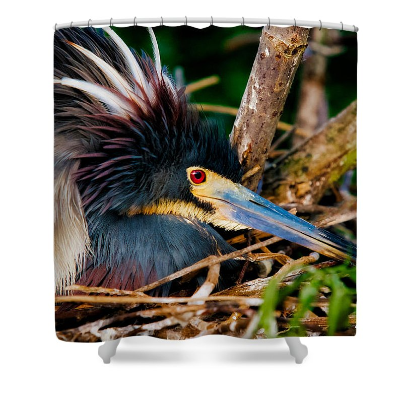 Art Shower Curtain featuring the photograph On The Nest by Christopher Holmes
