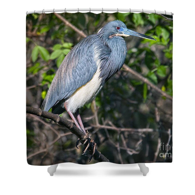 Shower Curtain featuring the photograph Posing by Claudia Kuhn