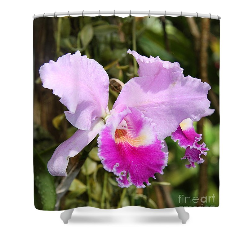 Orchid Shower Curtain featuring the photograph Pretty Pink by Christiane Schulze Art And Photography