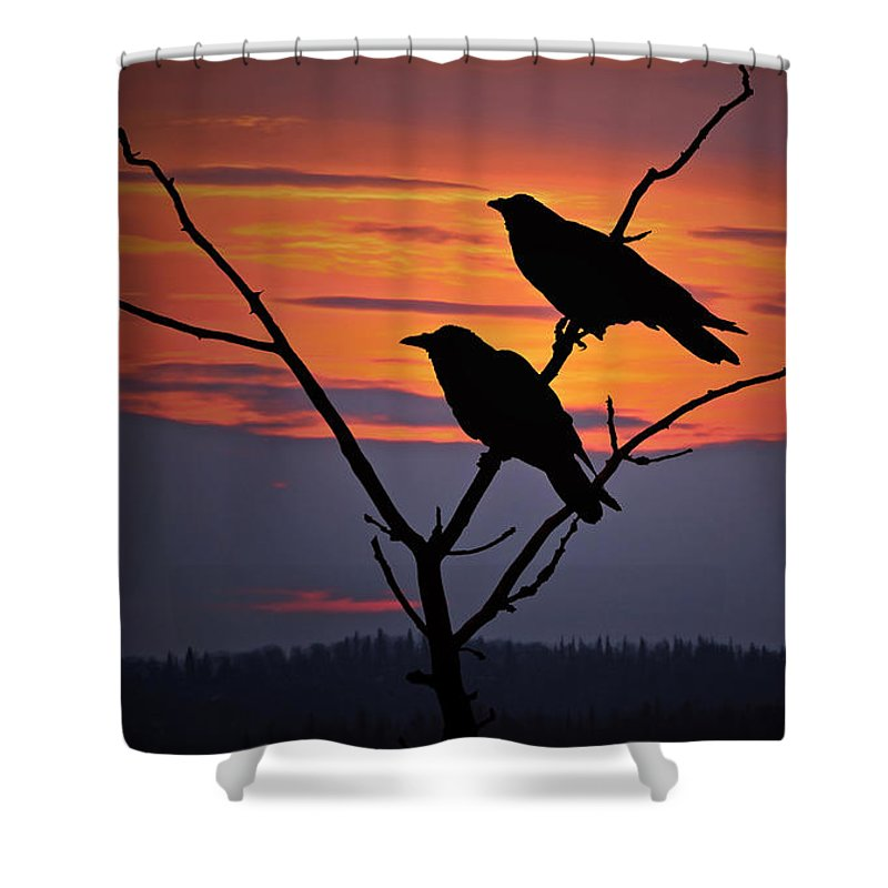 Raven Shower Curtain featuring the photograph 2 Ravens by Ron Day