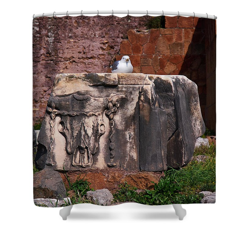2013. Shower Curtain featuring the photograph Restplace by Jouko Lehto