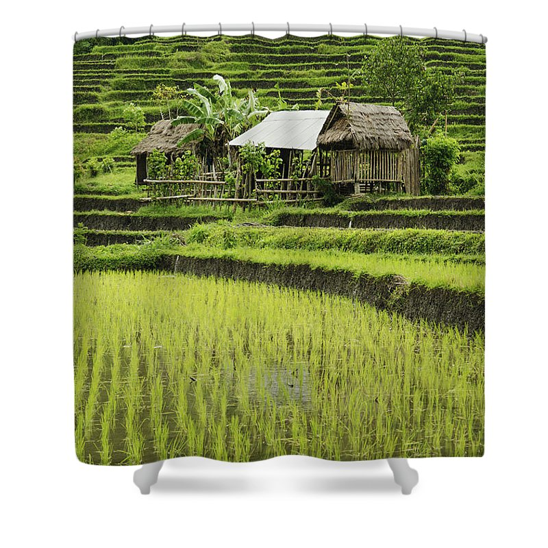Agriculture Shower Curtain featuring the photograph Rice Fields In Bali Indonesia by Jacek Malipan