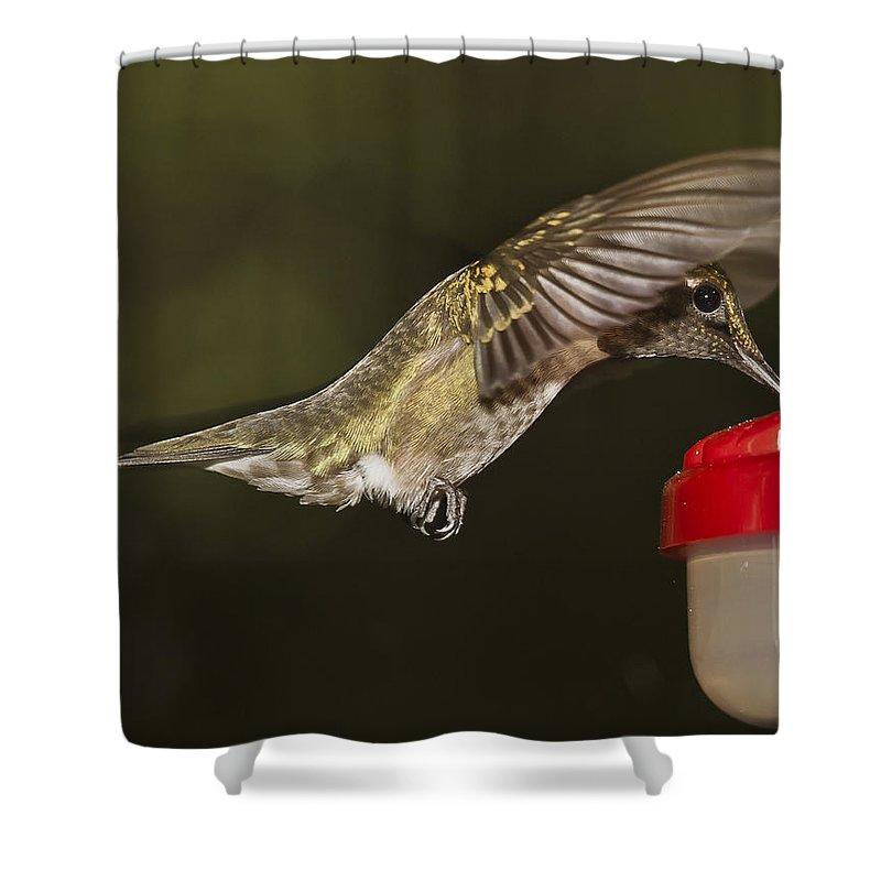 Ruby Throat Hummingbird Shower Curtain featuring the photograph Ruby-throat Hummingbird by Robert L Jackson