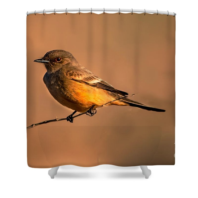 Birds Shower Curtain featuring the photograph Say's Phoebe by Robert Bales