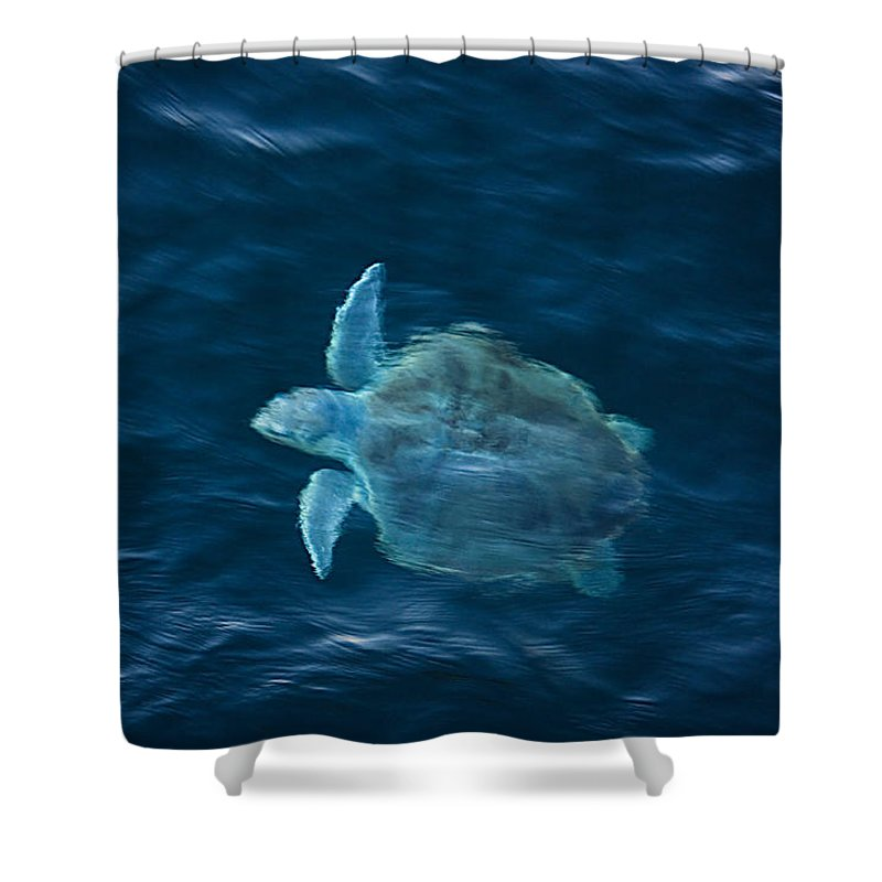 Sea Turtle Shower Curtain featuring the photograph Sea Turtle by Tammy Schneider