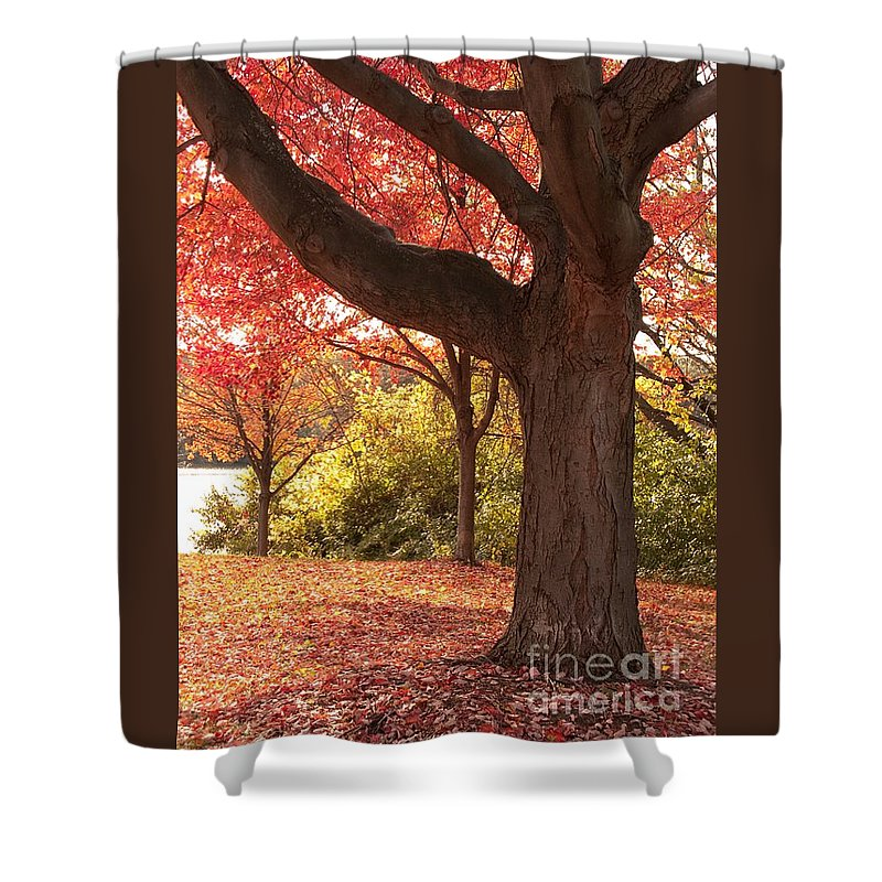 Autumn Shower Curtain featuring the photograph Shading Autumn by Ann Horn